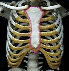 Injury Sternum